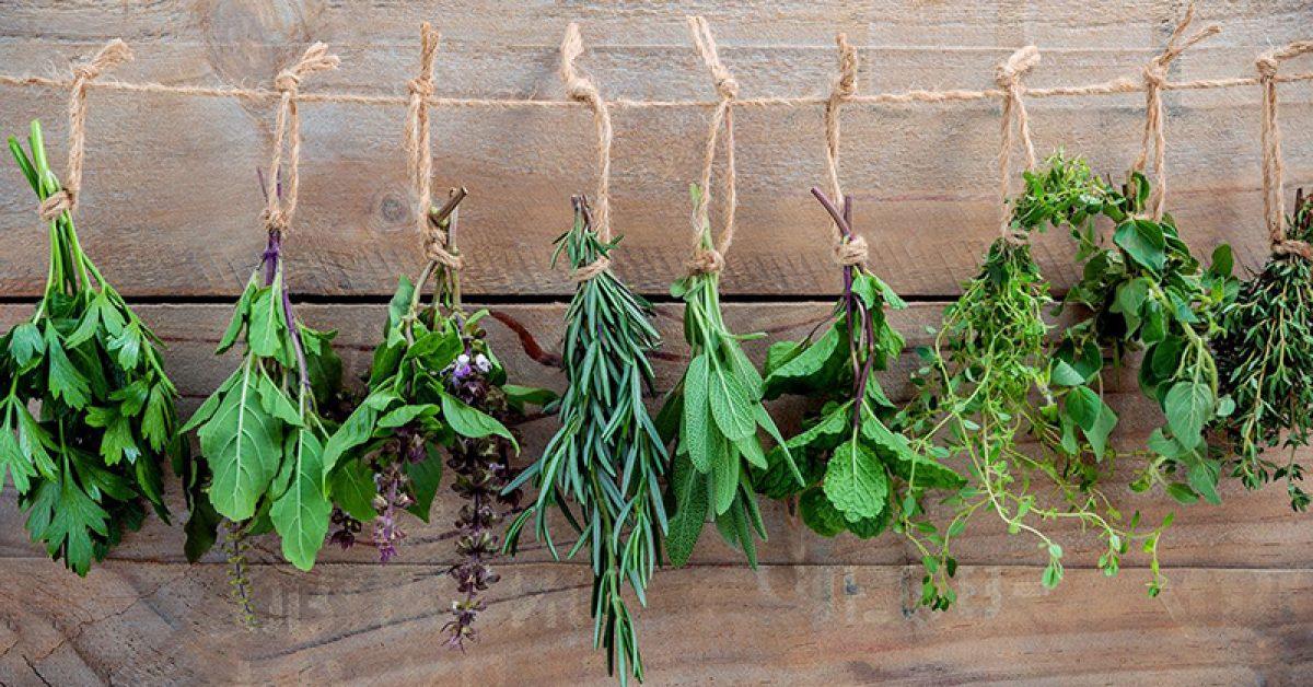 top-10-des-herbes-de-cuisine-que-lon-adore