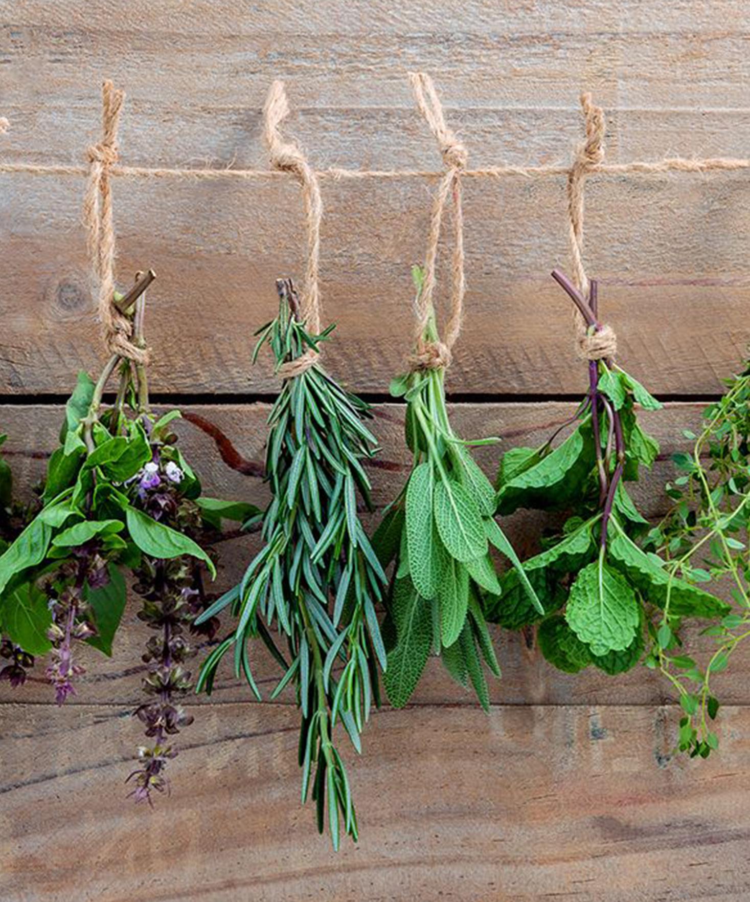 Top 10 des herbes de cuisine que l'on adore !